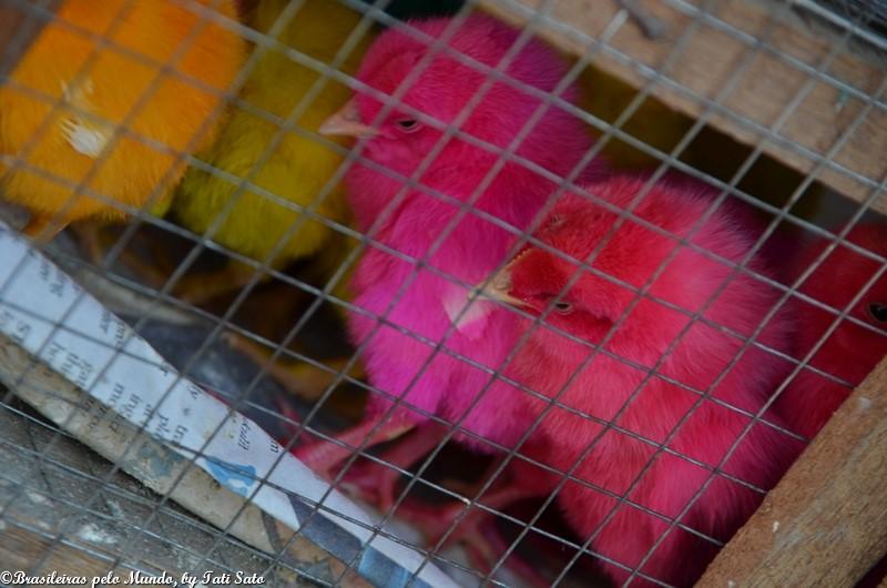 02-) pintinhos coloridos_pascoa_filipinas_tatisato