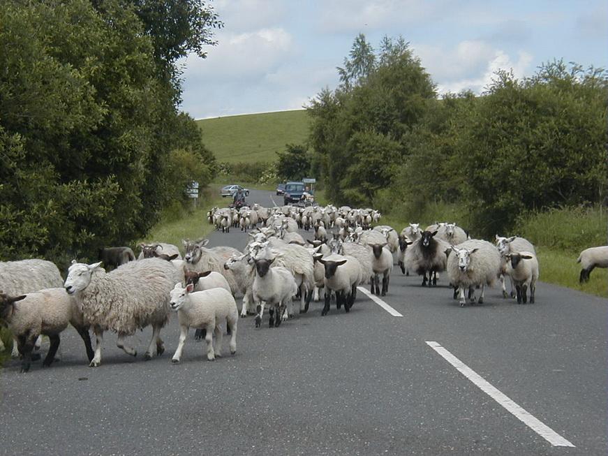 Trânsito na Escócia (crédito: http://www.jackandnan.com/)