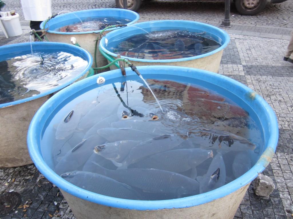 A carpa (peixe tradcional) pronta para ser vendida pelas ruas de Praga.