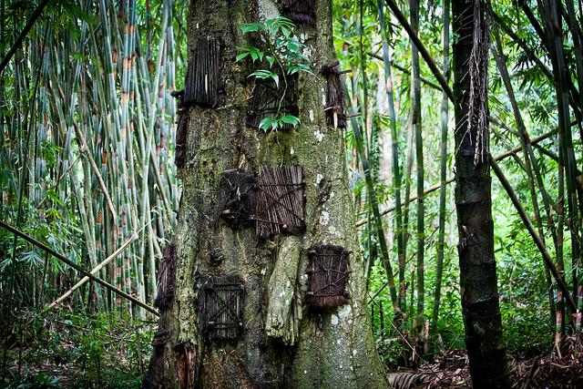 Baby tree_Matt Paish