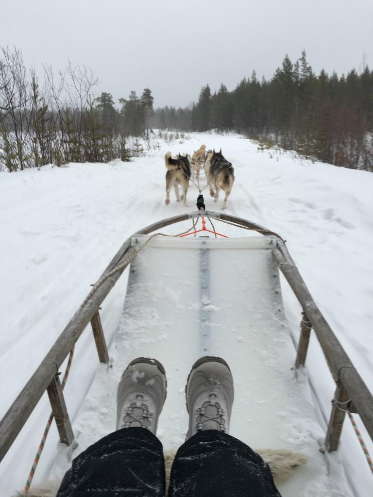 Passeio de trenó puxado por huskies