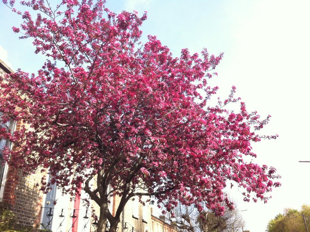 flores-primavera-dublin