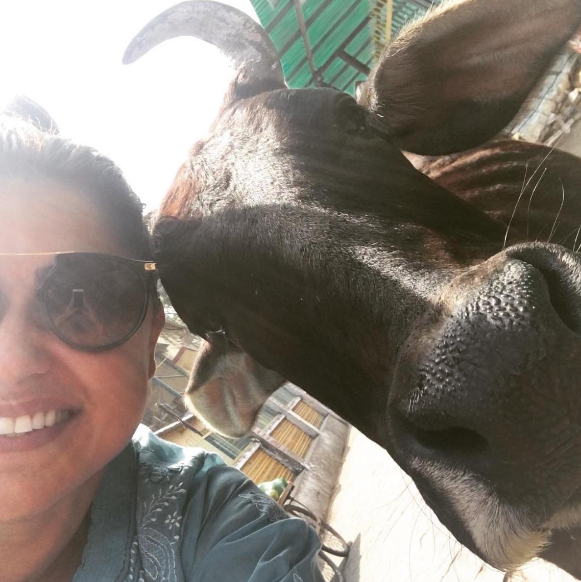 Ana Camila e a mãe sagrada vaca. Na Índia a vaca é um Deus.