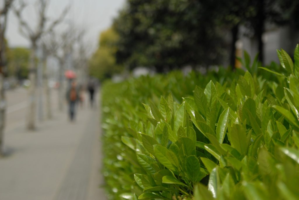 leaf-499665_1920