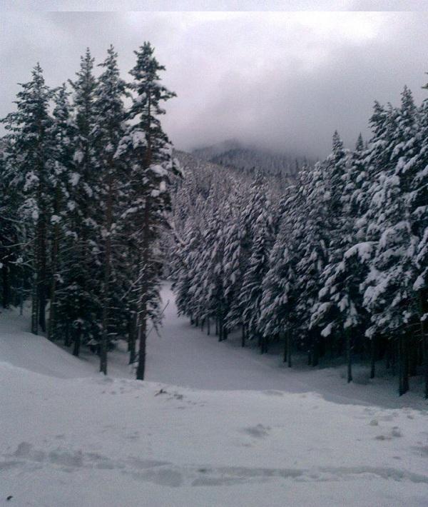 Floresta na Montanha Rila no Inverno 600 X 710