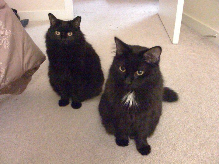 Mia e Mimi foram adotadas na Human Society