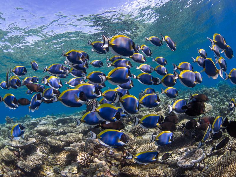 Passeio de snorkel. Foto: Joerg Blessing