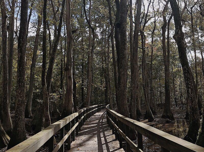 10 pontos turísticos, mississippi, tupelo-bald cypress swamp