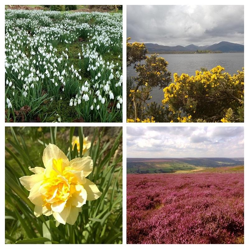 Em cima : Snowdrop e Gorse, em baixo : Daffodil, Heater