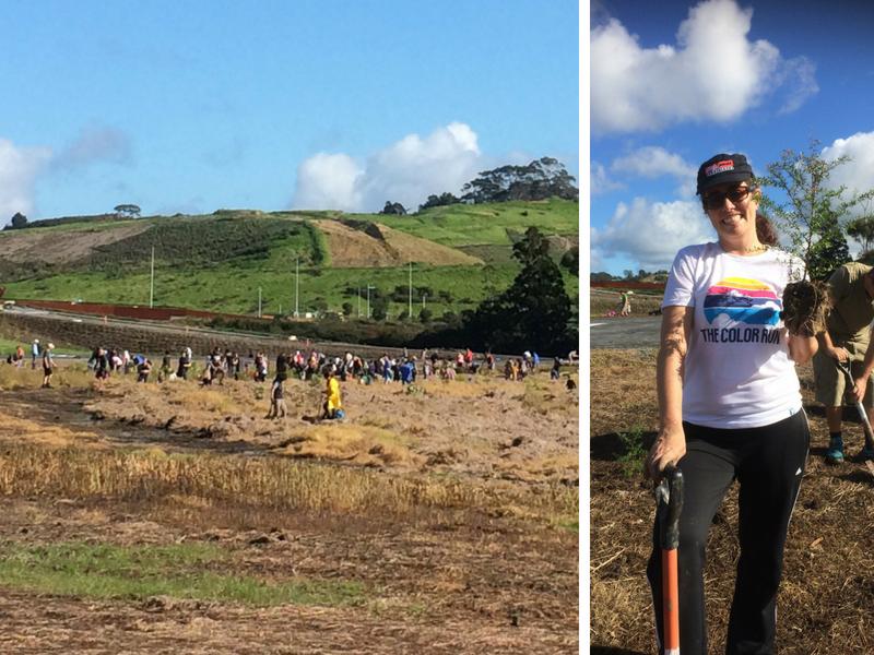 Trabalho Voluntario na Nova Zelândia