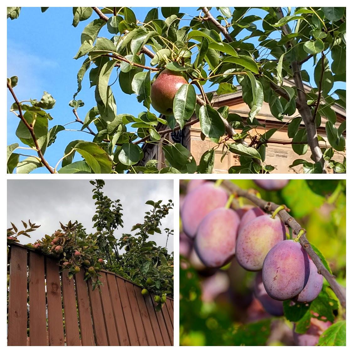 A estação das peras, maçãs e ameixas