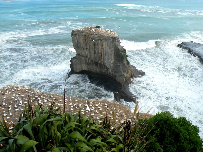 10 Passeios imperdiveis em Auckland NovaZelandia BPM