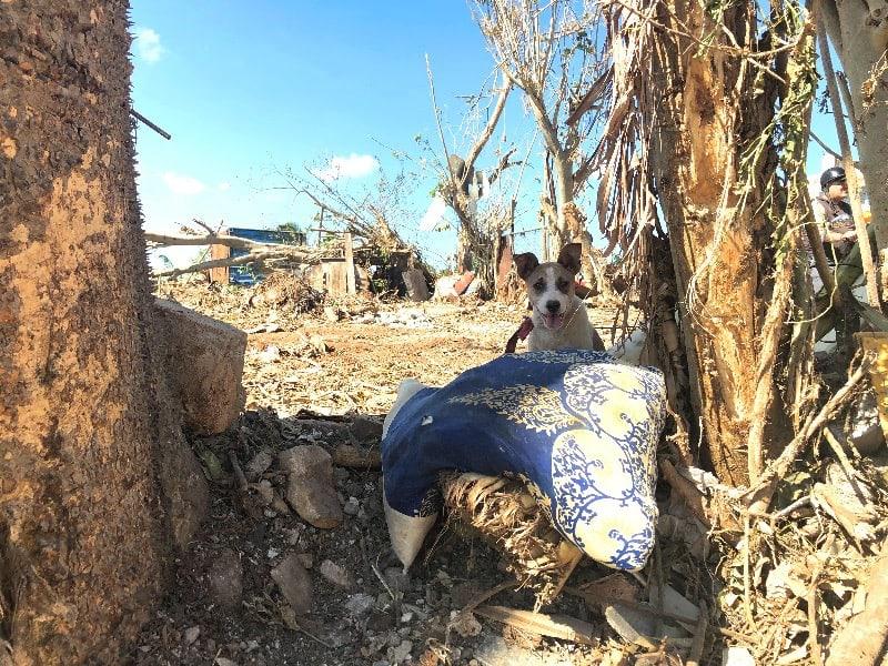 Bairro de Regla, Havana. O que sobrou de árvores e coisas arrastadas pelo tornado. Aqui uma almofada no meio dos escombros que virou cama desse cachorrinho. Arquivo pessoal 03 fev 2019.