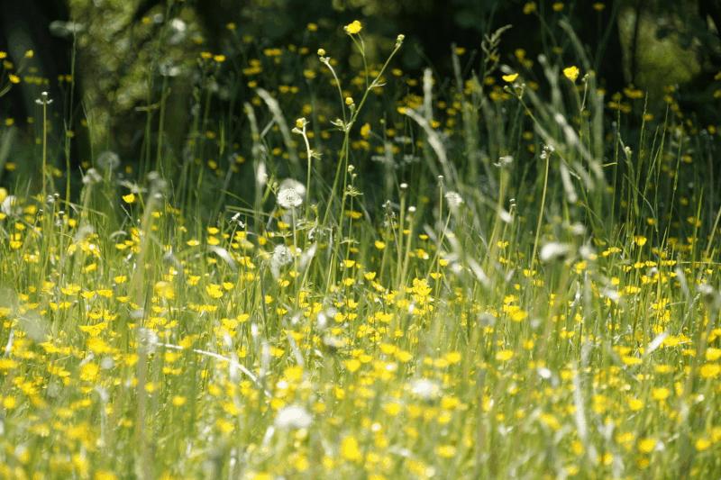 alergia, Finlândia, pólen, primavera, tratamento de alergia, crise alérgica