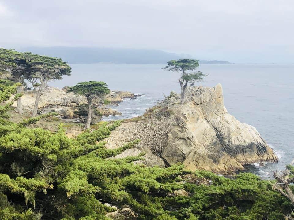 17-mile-drive - Lone Cypress. Fonte: arquivo pessoal